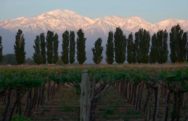 9 Must-Visit Attractions in Mendoza, Argentina