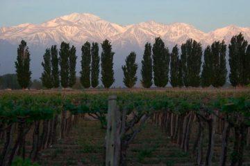 9 Must-Visit Attractions in Mendoza, Argentina
